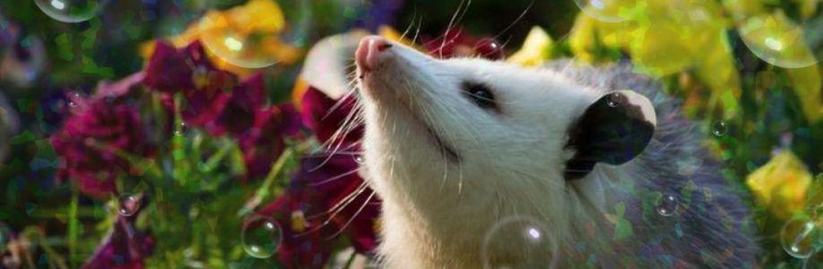 Possum Cover Image